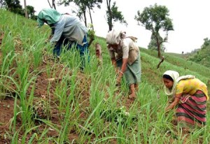 INDIA_ AGRICULTURE_SHIFTING_CULTIVATION