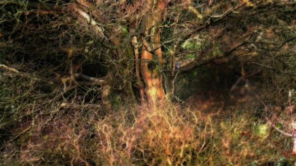 TreeBeard's Portraits